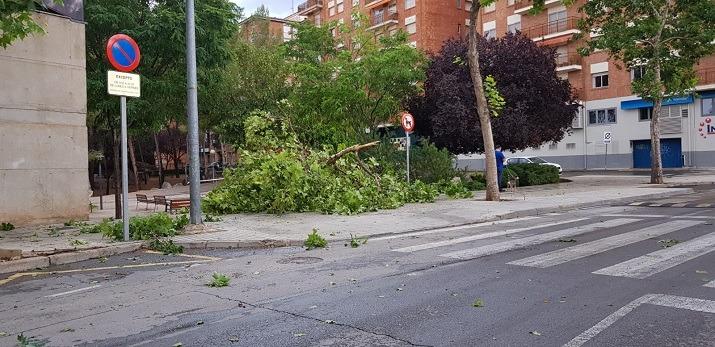Un arbol caido junto al Centro de Dia del Ensanche